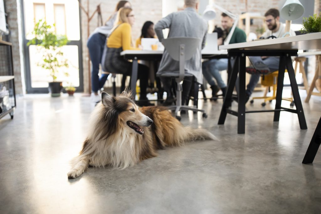 A dog in the workplace.